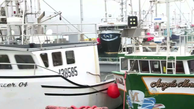 Fishermen want cod fishery done right if it returns